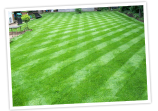Winter lawn treatment